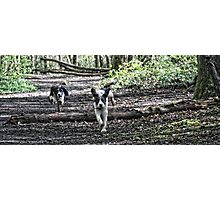 Benson chasing Jess in woods Photographic Print