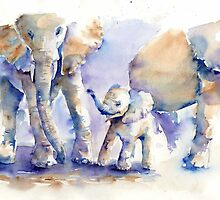 Elephants by Tania Richard