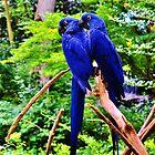 Two True Blue by Eileen Brymer