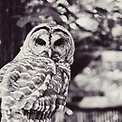 Owl Love by beverlylefevre