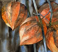 Chinese Lanterns / Physalis by Tania Vasylenko