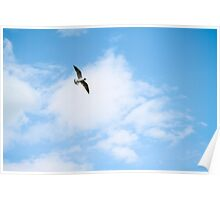 Seagull in the clouds Poster