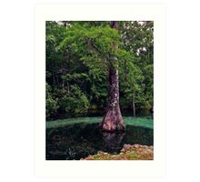 Ponce de Leon Spring. Holmes County. Art Print