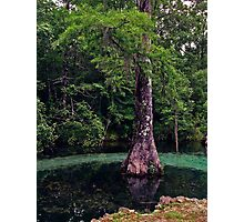 Ponce de Leon Spring. Holmes County. Photographic Print