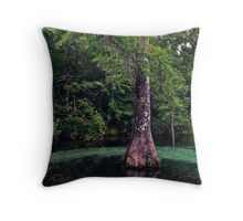 Ponce de Leon Spring. Holmes County. Throw Pillow