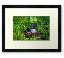 Loon Haven Framed Print
