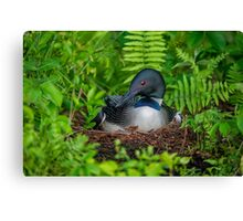 Loon Haven Canvas Print