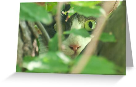 You can't see me! by Barbara Shallue