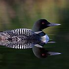 Reflective Loon by Jim Cumming