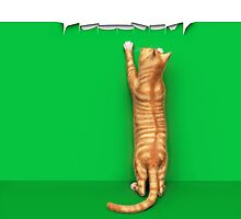 Redtabby cat and strips iPhone/iPod Case/Samsung by Roberta Angiolani