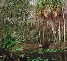Joshua Creek. Seminole Ranch.  by chris kusik
