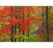 HARDWOOD FOREST, AUTUMN Photographic Print