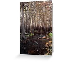 Cypress Swamp. Jane Green Creek #5. Greeting Card