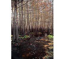 Cypress Swamp. Jane Green Creek #5. Photographic Print