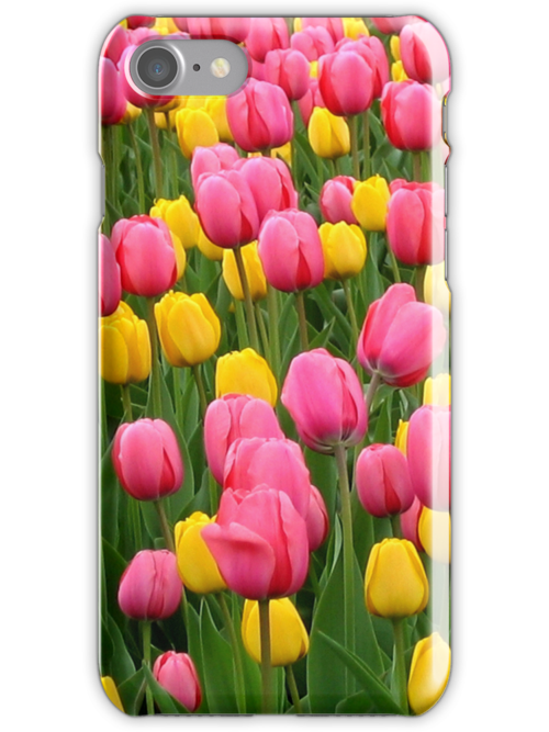 Tulips 1 by photonista