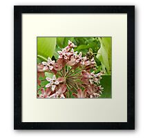 Buzz off...... busy here! Framed Print