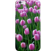 Tulips 14 iPhone Case/Skin