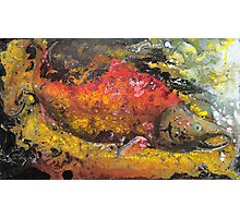 Red Salmon Photographic Print