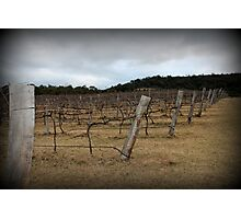 Winter Winery Photographic Print