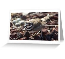 Female Killdeer Greeting Card