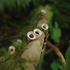 Nature's Nostrils by LunaticGnome