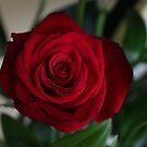 single rose  by xxnatbxx