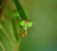 praying mantis by michelle meenawong