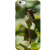 Dragonfly iPhone case iPhone Case/Skin
