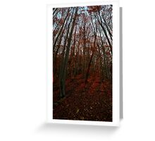 Beechwood sunset Greeting Card