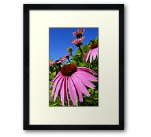 June Morning... Framed Print