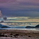 Padilla Bay by Mike  Kinney
