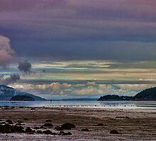 Padilla Bay by Mike  Kinney