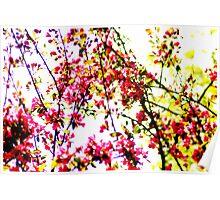 Oriental Cherry Blossom Poster