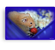 Twinkie eating a strawberry Canvas Print
