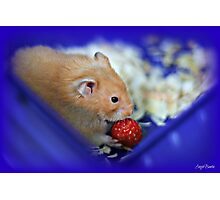 Twinkie eating a strawberry Photographic Print