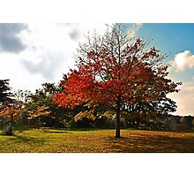 Tree in Fall Photographic Print