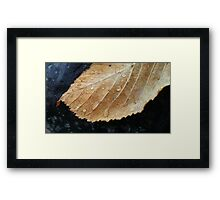 Gold leaf with raindrops Framed Print