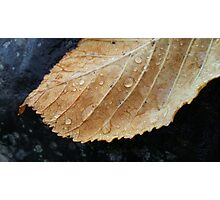 Gold leaf with raindrops Photographic Print
