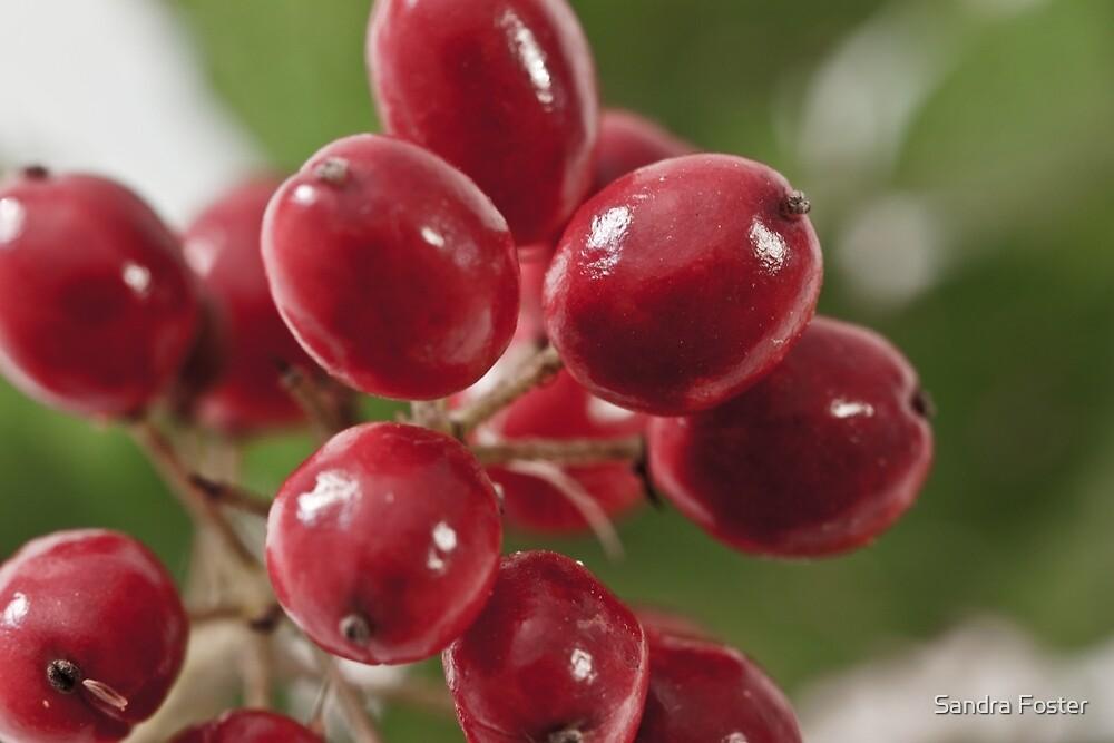 Wild Berry Cluster Macro by Sandra Foster