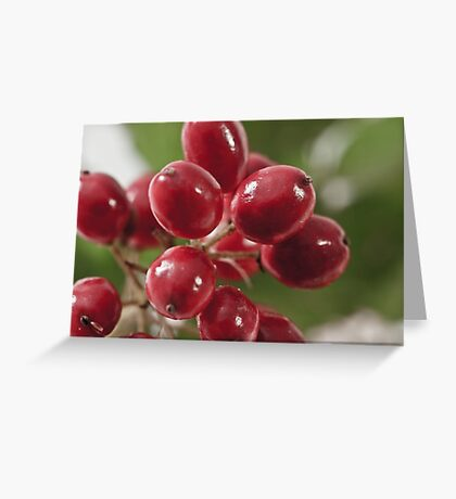 Wild Berry Cluster Macro Greeting Card