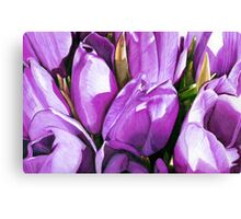 Purple Tulips in Coloured Pencil Canvas Print
