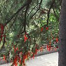 Lots of red prayer ribbons and prayer tags - up in a tree by Marjolein Katsma