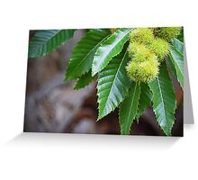 Chestnut Tree Greeting Card