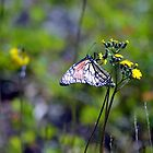 Butterfly in the Woods by Jacob Ennis