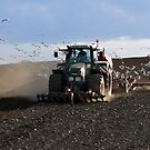 Tractor and gulls by jchanders
