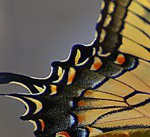 Angel Wings by MichelleAyn