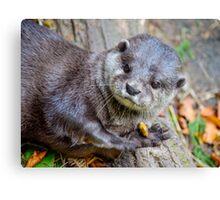 Beautiful Asian Otter Canvas Print