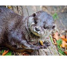 Beautiful Asian Otter Photographic Print