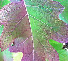Leaf by Julie Van Tosh Photography
