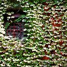 Lots of little leaves - (almost) hiding a wall by Marjolein Katsma